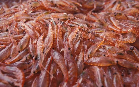 Krill Oil vs Fish Oil – Pros and Cons of Krill Oil