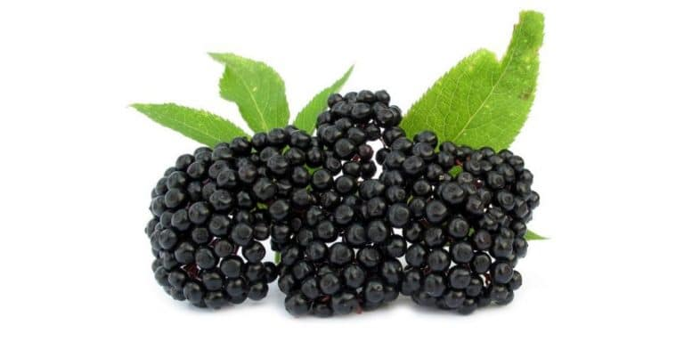 Elderberry: Nature's Cure for the Flu