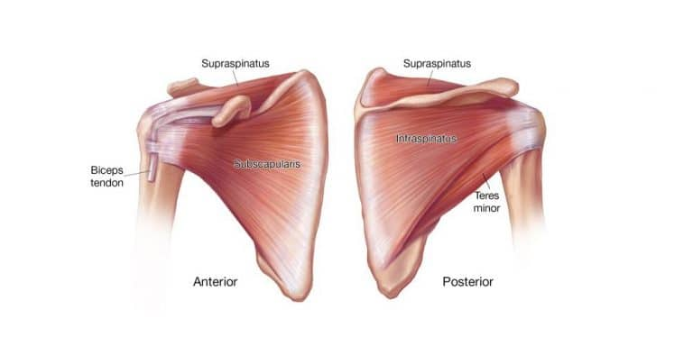 Subscapularis Exercises To Help You Bounce Back From